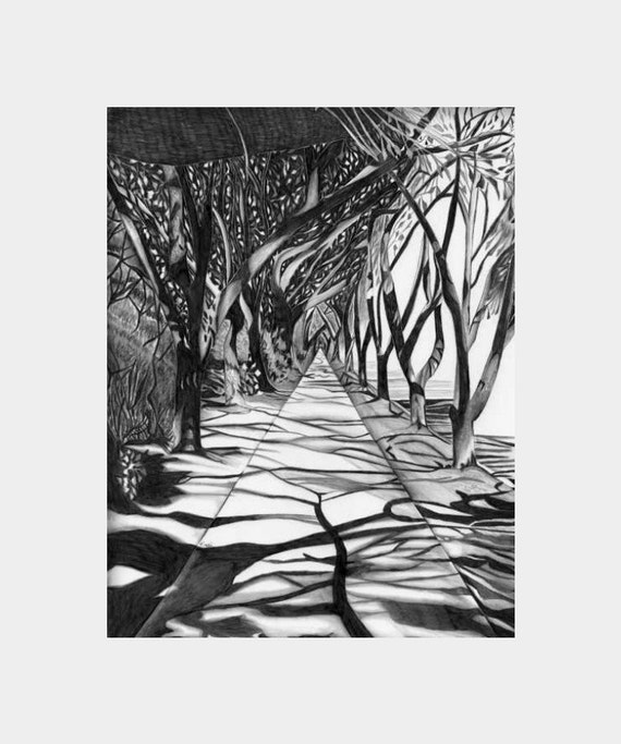 8.5 X 11 Path Of Trees Black White Gray By Penciledbynicole