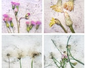 Nature Photography Set of Four 5x5 Botanical Art Prints - Dandelion Photos - Minimalist Home Decor Flower Photographs. For the Home