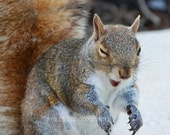 """CLEARANCE Cute Animal Photography, Squirrel Picture, funny animals, nature photograph - 5x7 inch Print - """"Laughing Out Loud"""""""