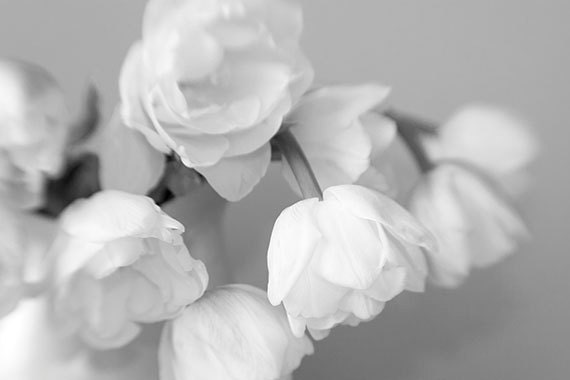Black and White Photography Tulip Print Still Life