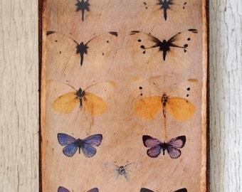 Butterflies Specimens Photo C -Wall Art