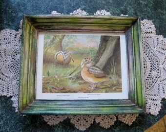 Vintage print of an American Woodcock Framed in a Custom Stained Wooden Frame