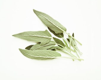 """Food Photography - minimal kitchen wall art - pale sage green leaves - fresh herbs farmhouse - foodie cooking white  """"Fresh Sage"""""""