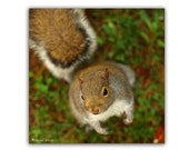 Squirrel In The Forest Photograph Affordable Home Photography Prints Nature Photography Decor Nature Lover Woodland Scene