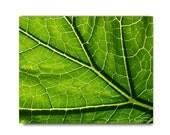 Green Leaf Print Leaf Vein Photograph Natural History Print Woodland Forest Scene Home Decor Green Leaf Vein