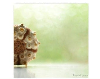 Sputnik Urchin Photograph...Affordable Home Photography Prints Nature Photography Decor Sea Theme Water Sea Urchin