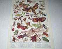 Vintage Color Plate of Insects or Bugs in Their Natural Colours