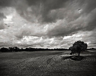 landscape photography black and white photography tree clouds home decor Fine Art Photograph office decor