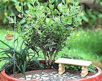 Exclusive Miniature Garden Kit for Indoors or Outdoors, Make Your Own World, Create a Fairy Garden, Mini Plants, Trees AND FREE Shipping