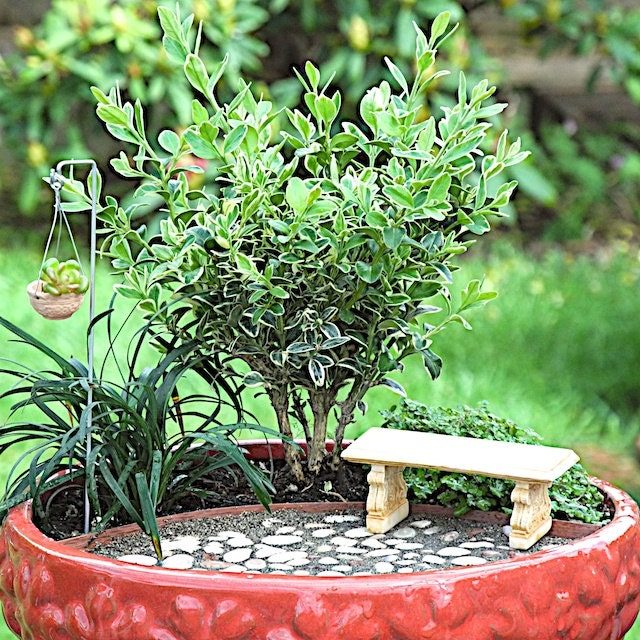 Exclusive Miniature Garden Kit For Indoors Or Outdoors Make