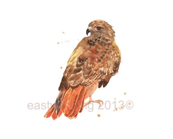 Hawk painting watercolor - photo#50