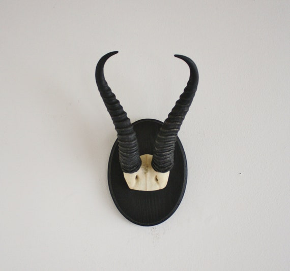 Authentic Gazelle horns mounted on handmade wooden plaque