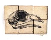 Ornithology - Pencil on Wood - Rough Hewn Series