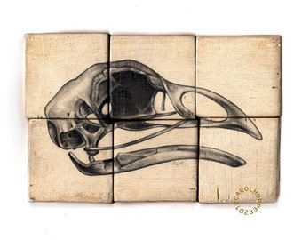 Ornithology - Pencil on Wood - Rough Hewn Series