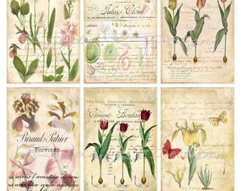Botanique Collage Sheet-Digital Scrapbooking-Digital Card-Digital Image
