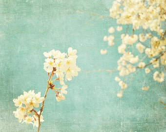BUY 2 GET 1 FREE Flower Photography, Nature Photo, Cherry Blossoms, Spring, Blue, White, Romantic, Wall Decor, Happy - Feminine Chic