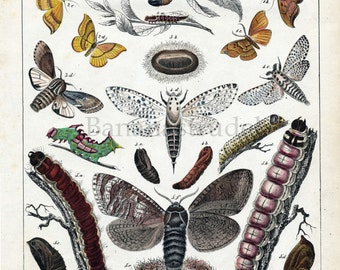 Antique Print of Moths - 1842 Rare Hand Coloured Lithograph by Karl Friedrich Berge