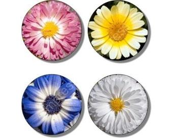 Daisy Flowers Coasters - Set of 4