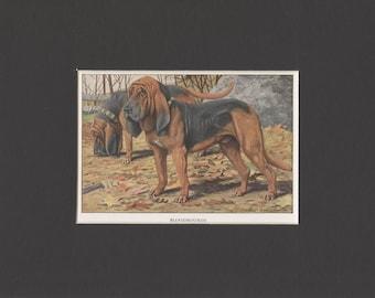 1919 Vintage Dog Print of Bloodhounds