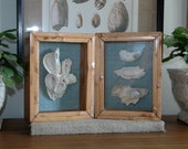 Oyster Shell Shadow Boxes