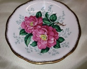 Queen Anne Saucer Camellia Pattern Fine Bone China Made in England