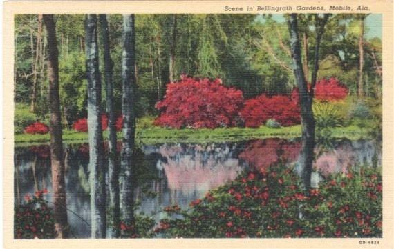 Vintage alabama postcard mirror lake at bellingrath gardens for Bellingrath coupons