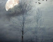 "Surreal photography dreamy blue trees winter landscape dark snow ice home decor wall art - ""Winter Moon 8 x 10"""