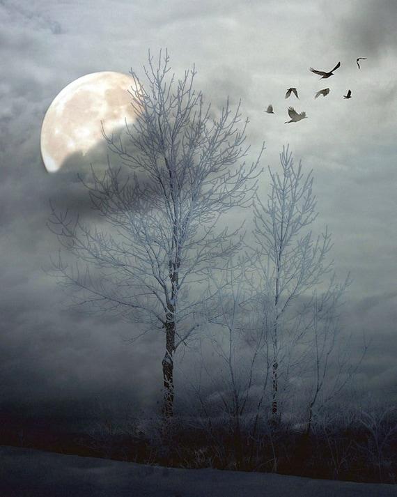 "Surreal photography dark dreamy blue trees full moon winter landscape snow ice  - ""Winter Moon 8 x 10"""