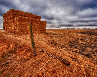 Winter Field - Landscape Photography, Nature Photography, Country, Rural, Iowa