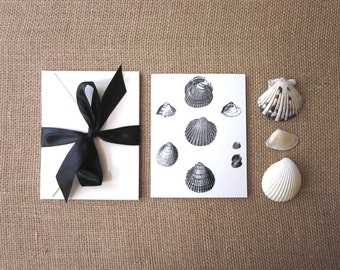 Shell Note Cards Set of 10 with Matching Envelopes