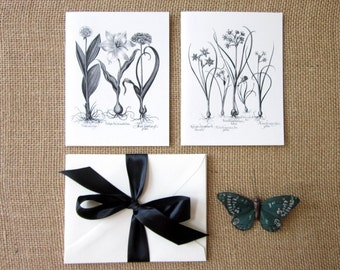 Flower Bulbs Note Cards Set of 10 with Matching Envelopes