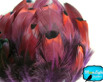 Feathers, 1 Pack - PURPLE Ringneck Pheasant Plumage Loose Feathers 0.07 oz. : 2046