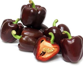 Pepper, Miniature Chocolate Pepper Seeds - Short Stocky Sweet Peppers