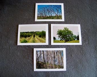 Trees Medley-set of 4 blank notecards