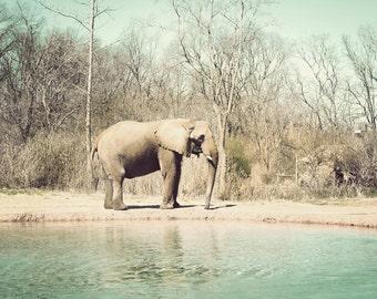 safari nursery art, elephant pictures, nursery artwork ideas, elephant wall art, safari decor, toddler room decor, animal photography