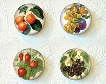 Magnet Vintage Pictures of Fruits Set of Fruit  Magnets  Buy 3 Get 1 Free 314M