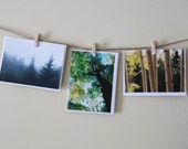 Woodland Landscape - Set of 3 Blank Cards - Tree Scenes -Thank You Cards - Foggy, Fall Leaves, Green Trees - Arbor Day - Forest - PhotoLadz
