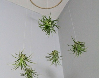 Air Plant Mobile // Natural Living Decor // Home Decor, tillandsia, hanging, airplant hanging, nursery decor, unique mobile, eco gift