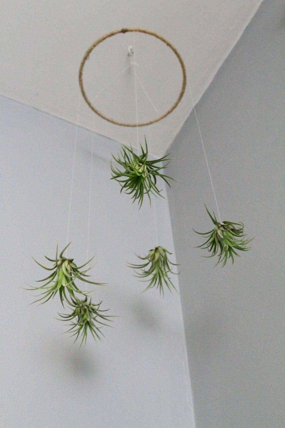 Air plant mobile natural living decor home decor for Air plant decoration