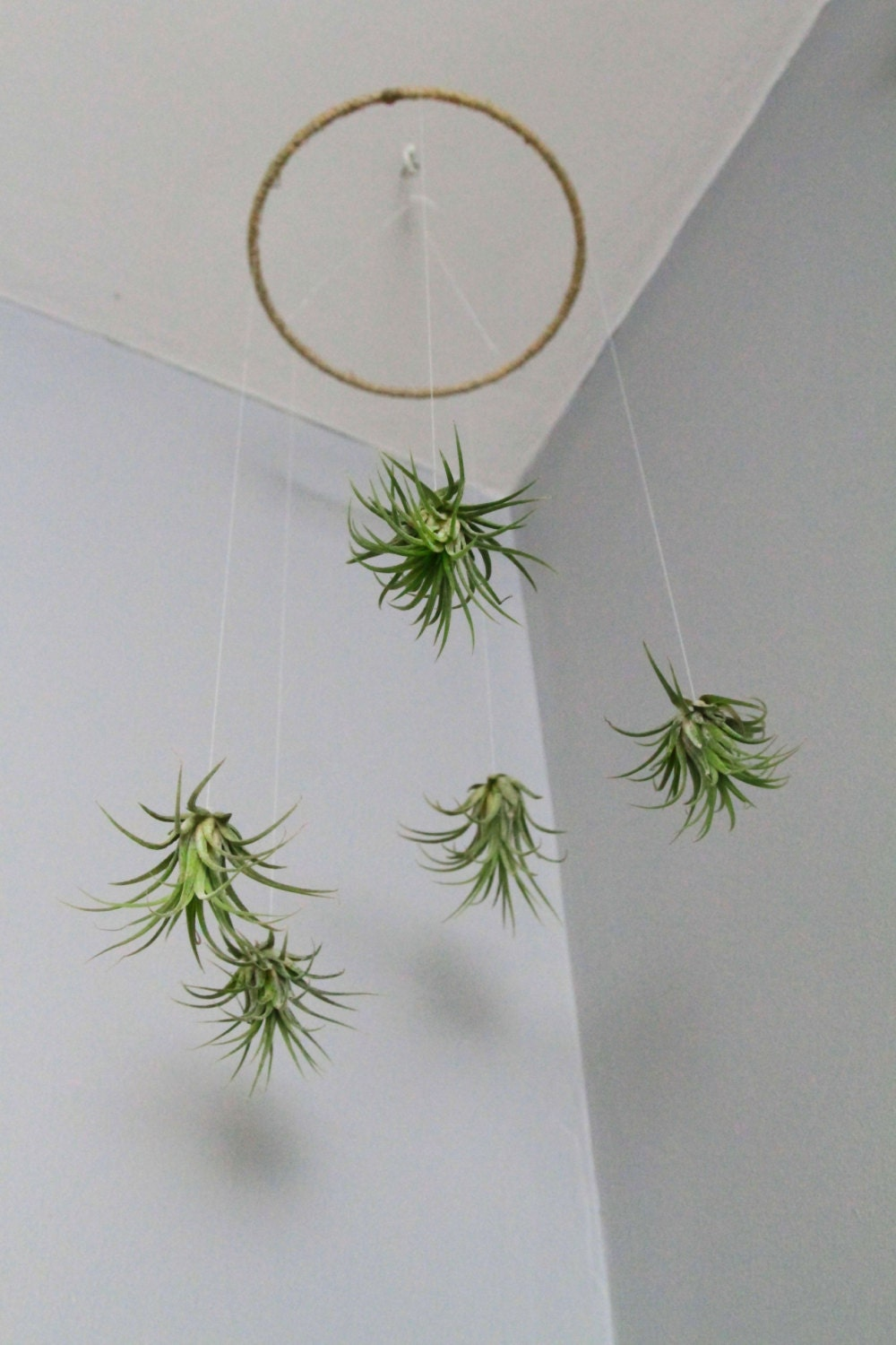 Air plant mobile natural living decor home decor for Home decor with plants