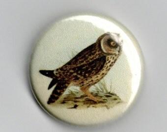 Audubon Owl Vintage Image 1 inch Button