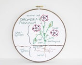 "Embroidery Hoop Art of Botany Study: Chromeria Parvusum. Botanical Flowering Plant Diagram, Green and Red Nature Study in 8"" Hoop"