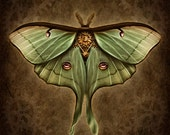 Steampunk Luna Moth - Art Print - Brigid Ashwood