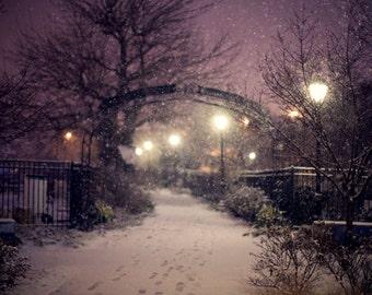 Garden in the Snow at Dusk - 8x12 Fine Art Photograph