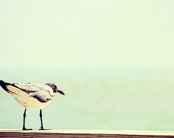 Seagull Summer Ocean Beach   - 11 x 14 art photography print by Dawn Smith