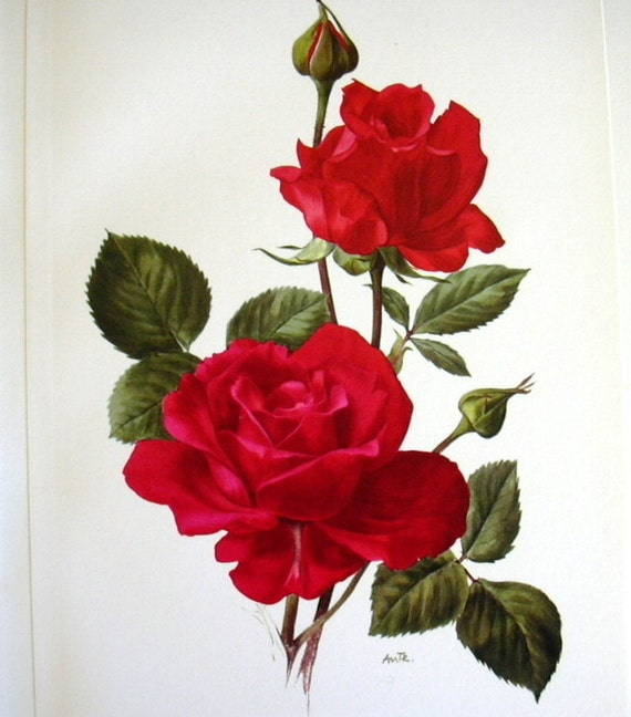 Dynamic image pertaining to printable roses