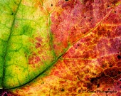 Autumn Leaf abstract wall art, Seasonal colors, Office and home decor, Choose from the list of available sizes.