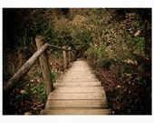 Woodland photography print, 5x7 inch - Elven Pathway - nature wall decor, in the woods, dark green