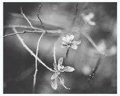 Black and white nature photography - wall decor - branches, leaves, spring, dreamy nature, botanical - Blossom Out Loud