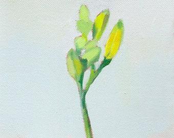 "flower still life - ""Daylily 1"""